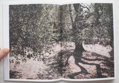 Sample page 8 for book  Martino Marangoni – Nonni's Paradiso - An Olive Tree Story