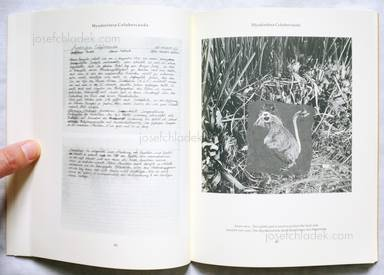 Sample page 6 for book  Joan / Formiguera Fontcuberta – Dr. Ameisenhaufens Fauna