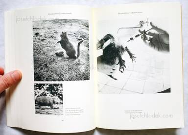 Sample page 9 for book  Joan / Formiguera Fontcuberta – Dr. Ameisenhaufens Fauna